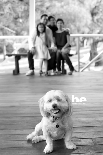 pet and family portraits (2)